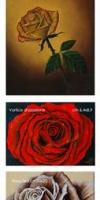 03 - Rose_4.5x18