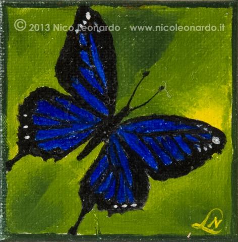 137_2013-11_m61 farfalla nerazzurra 5x5_C