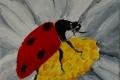 235_2014-02_m154 coccinella fiorente 5x5c