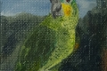 99_2013-09_m24 Ara pappagallo 5x5C