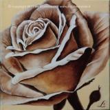 035_2012-10 Rosa Tea_ 20x20