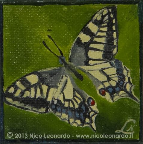 104_2013-09_m29 mini farfalla 5x5C